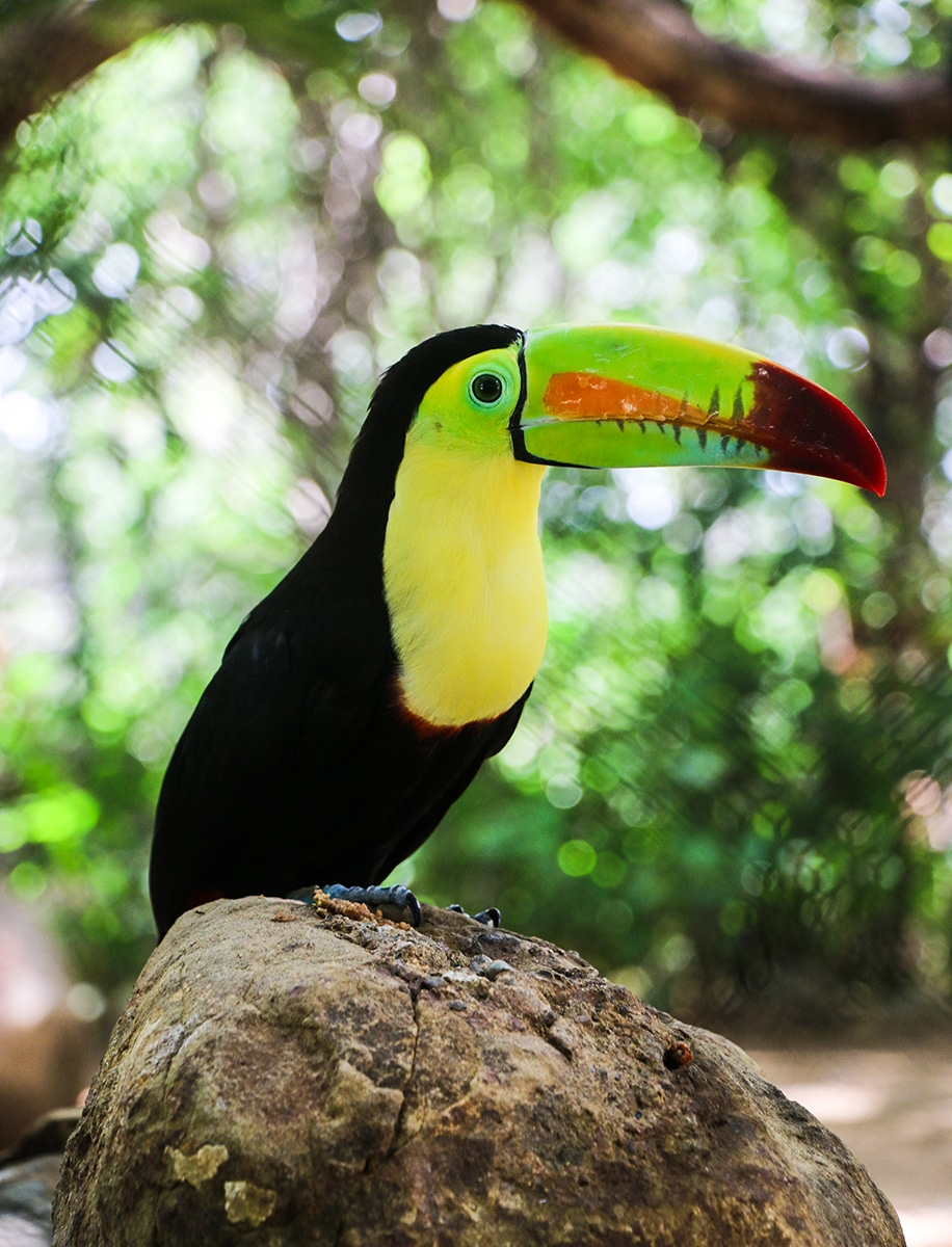 Cartagena Aviary